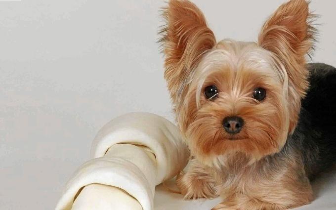 #NoSonBuenasNoticias: Más de 66 perros rescatados de un domicilio familiar en Rute