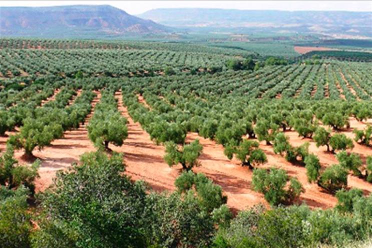 Los agricultores andaluces comienzan a cobrar más de 800 millones de euros de anticipo de ayudas de la PAC