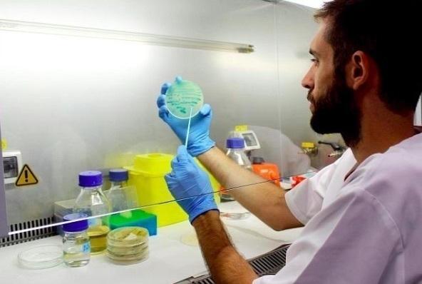 Un descubrimiento sobre la malaria podría llevar a mejores tratamientos para el VIH, el lupus y la hepatitis C