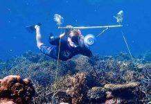 Altavoces bajo el agua: la nueva solución para revivir los arrecifes de coral