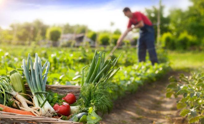 Andalucía refuerza la agricultura ecológica con más de 15 millones de euros
