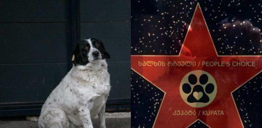 El perro Kupata y la estrella otorgada por el departamento de turismo de Adjara