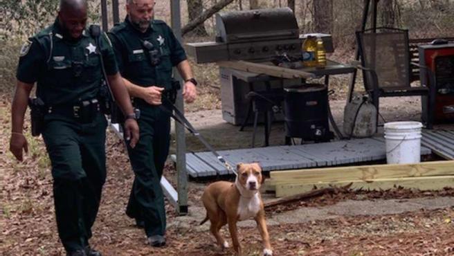 operación de bosque de próstata de perros