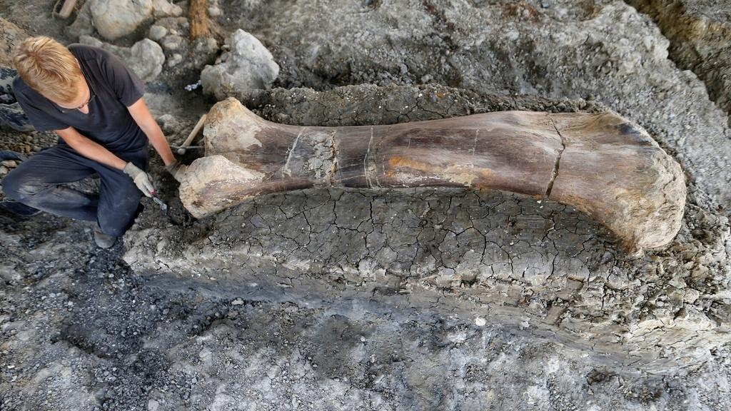 Hallan Un Nuevo Yacimiento Con Restos De Dinosaurio En España