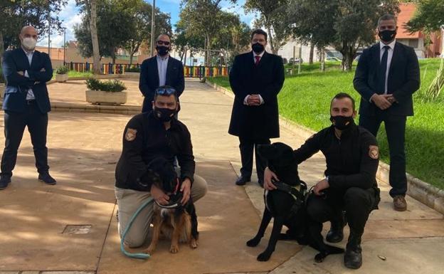 """Dos perros son adiestrados para detectar con el olfato el Covid: """"Rozan el 100% de efectividad"""